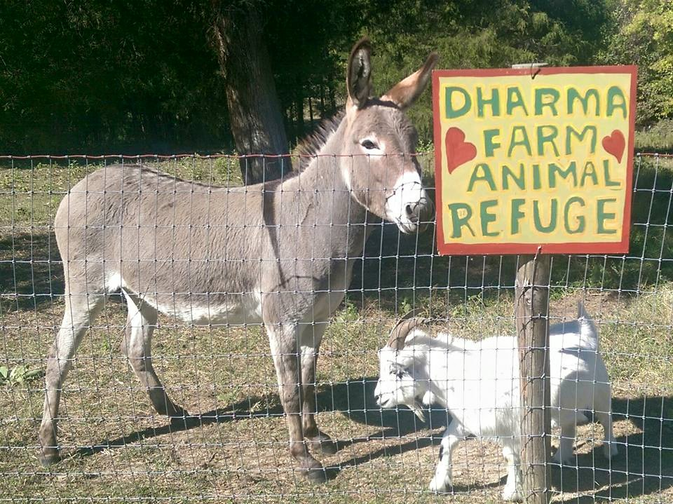 dharma farm animal refuge